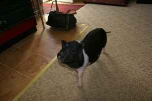 And she has a piggy! How can you say no to that little face?!