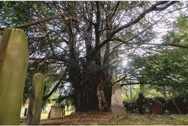 Hug a tree, love the goddamned planet.