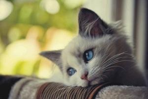 Sad kitty is sad.